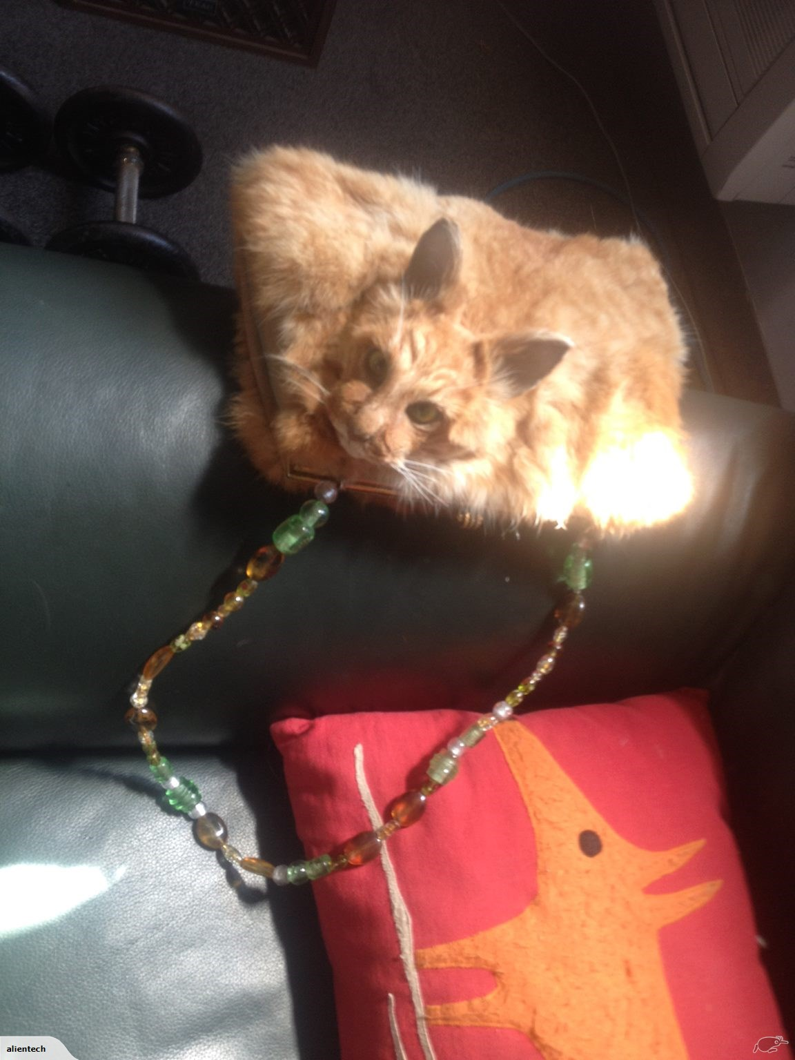 The purse made from a dead cat.
