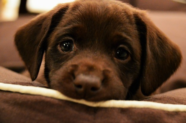 17-puppies-who-are-so-cute-they-will-make-you-mad-2-30501-1424359138-6_dblbig