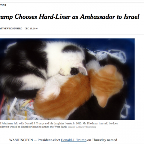 This new Chrome extension will turn every photo of Trump into pics of kittens