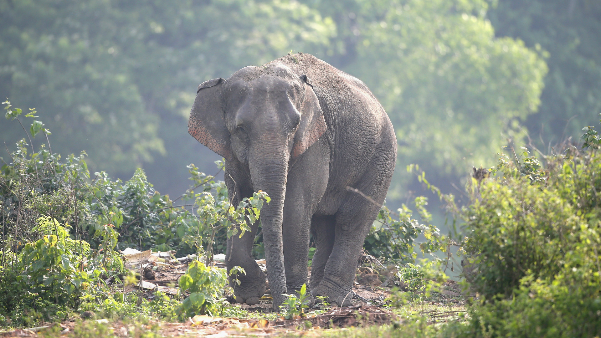 An elephant in India