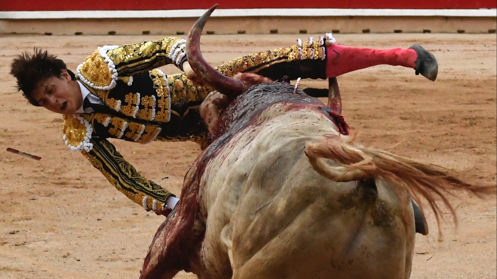 The world's worst matador.
