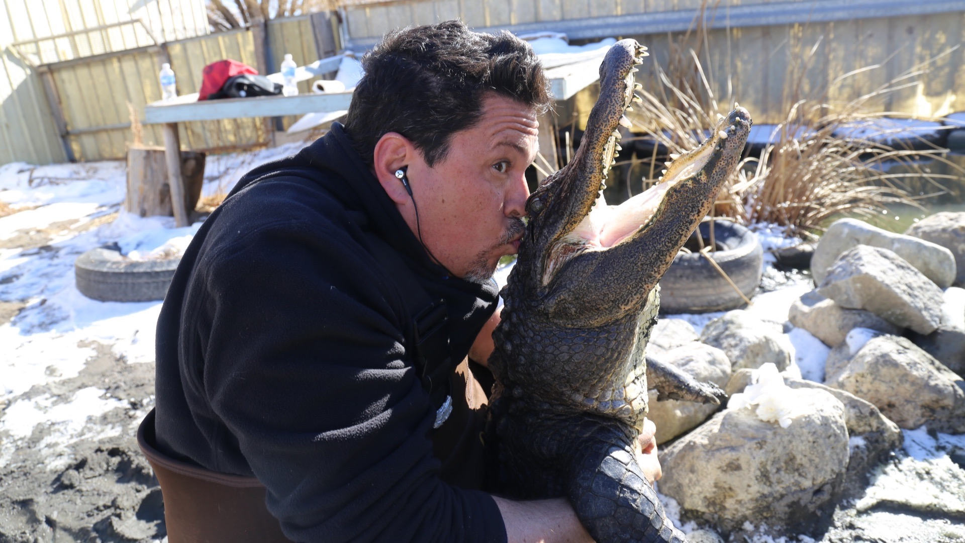 Dom Joly alligator wrestling.