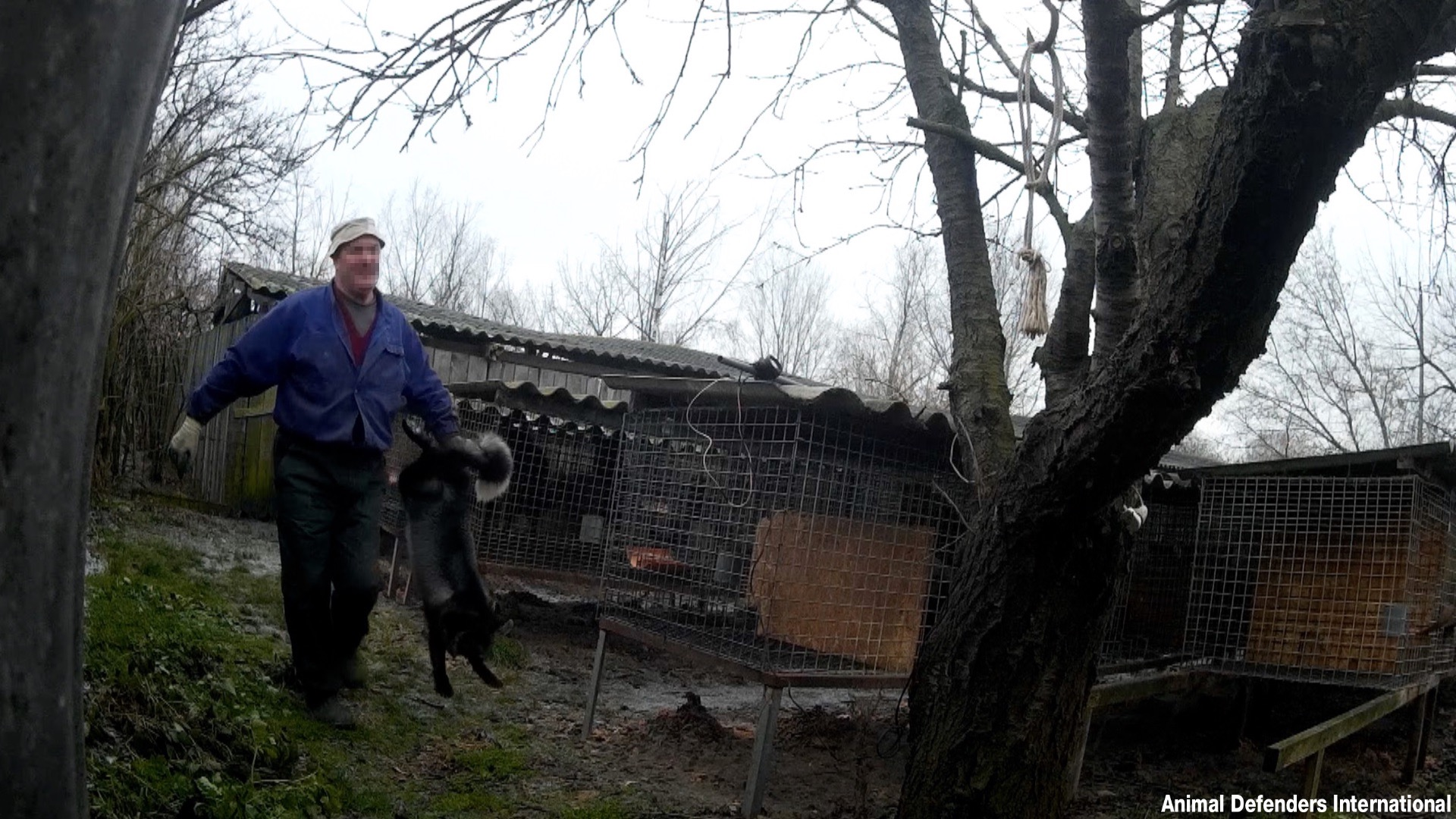 Undercover footage from a Polish fur farm.