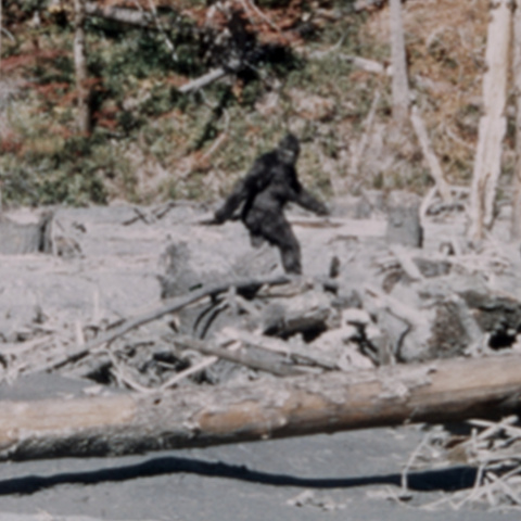 A fake bigfoot film.