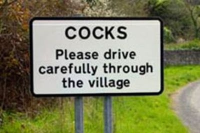Cocks in Cornwall.
