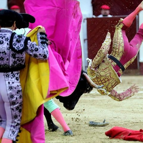 A matador getting gored in the butt.