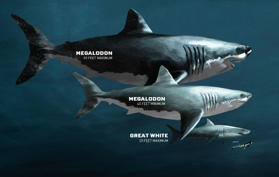 The Megalodon shark comparison.