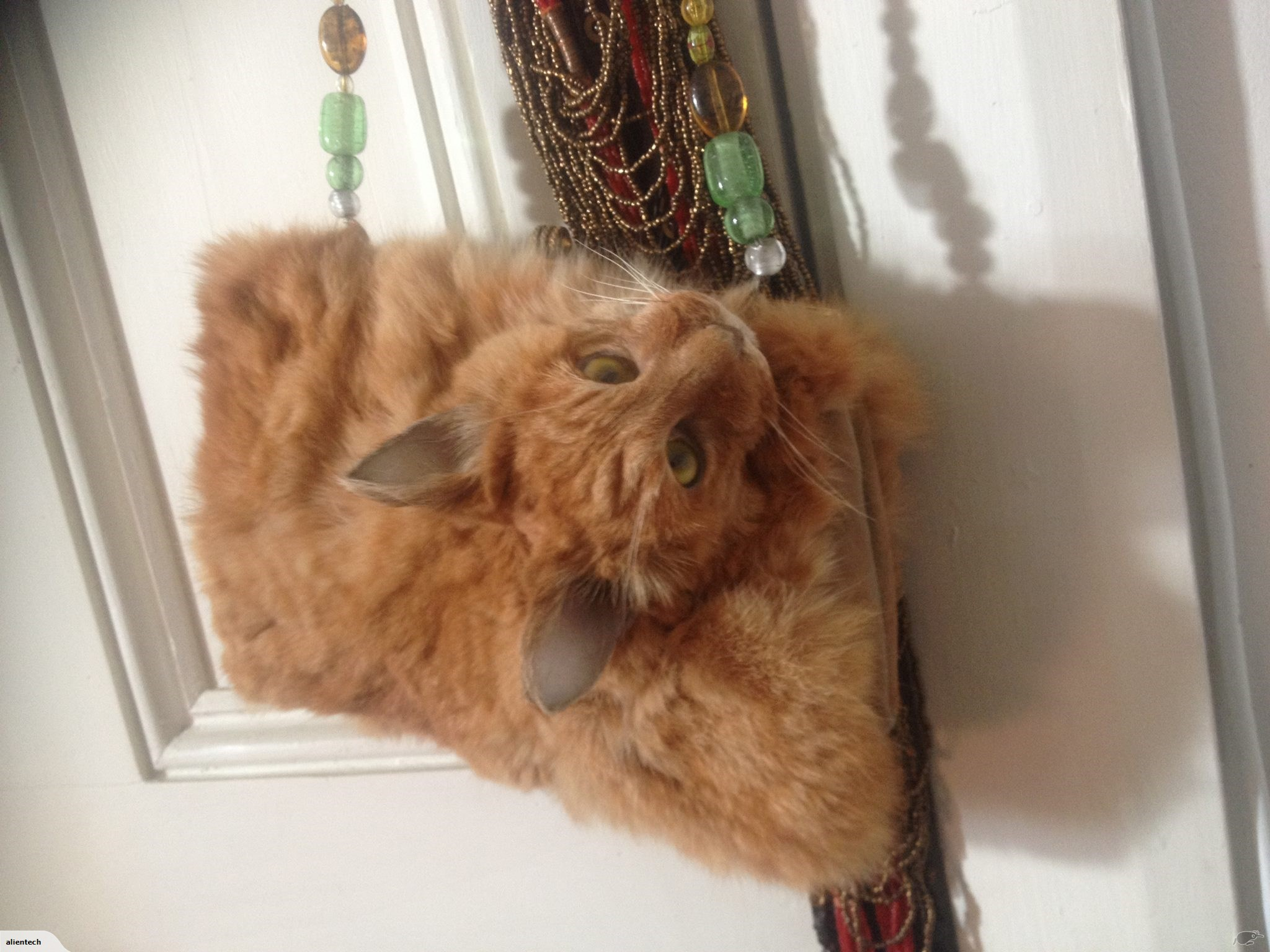 A purse made from a dead cat.