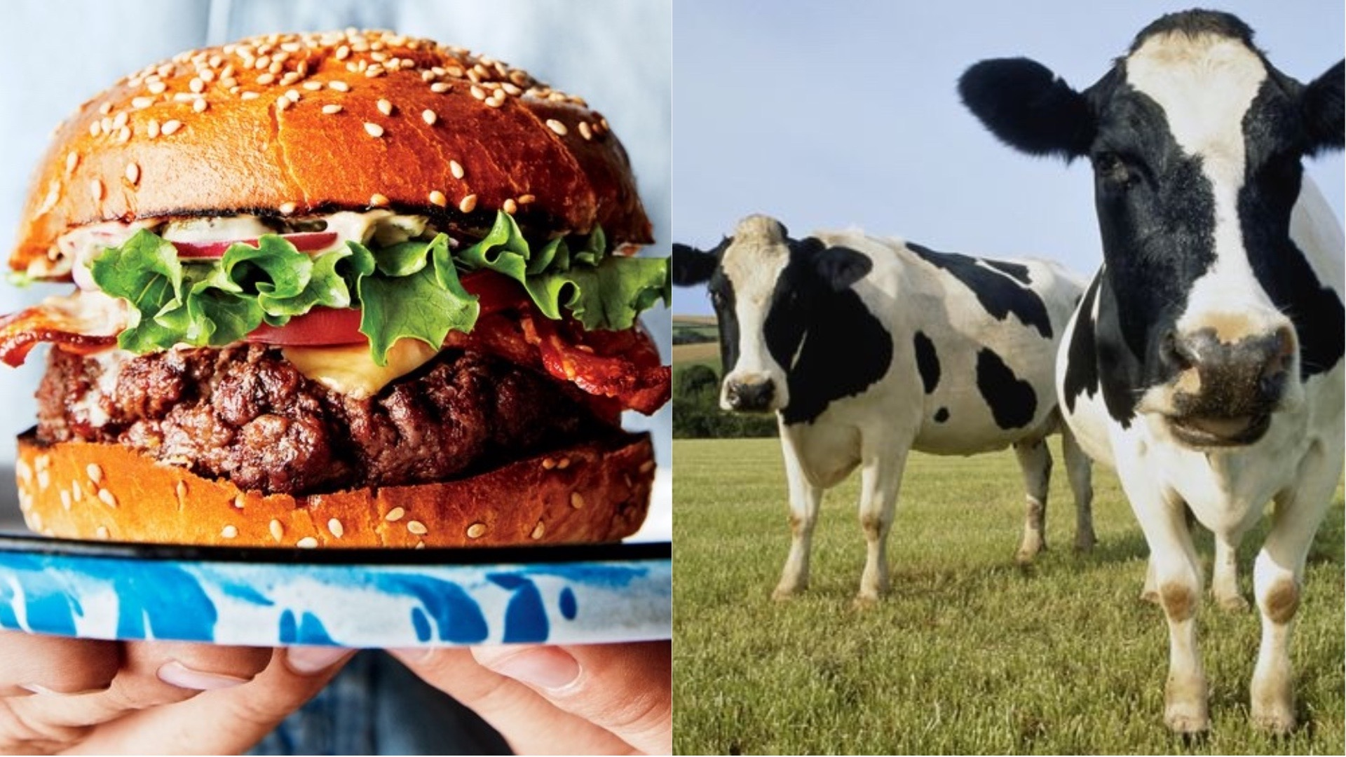 Burgers and cows.