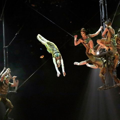 Performers during the Cirque du Soleil OVO dress rehearsal at Royal Albert Hall on January 9, 2018 in London, England.